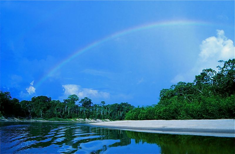 Selva y arco iris