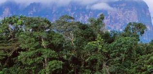 Tepuy y selva
