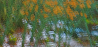 Abstracción del bosque